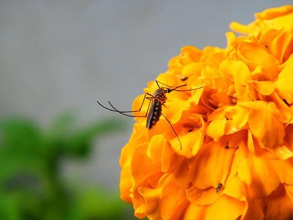 חפצים - עיצוב הבית לרגל מזג האויר: צמחים דוחי יתושים