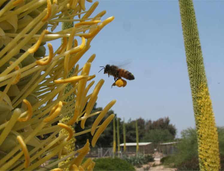 חפצים - עיצוב הבית גן בוטני על שפת המדבר – הזמנה לטיול מעניין ביותר
