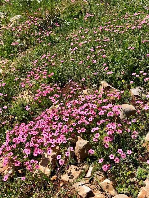 חפצים - עיצוב הבית הפריחה בגלבוע, רוזליה ועמק יזרעאל