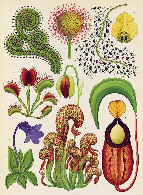 """חפצים - עיצוב הבית Botanicum</br>Katie Scott & Kathy Willis</br></br>""""מוזיאון הצמחים"""" – ספר אמנות מרגש"""