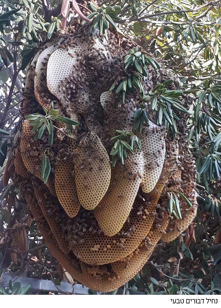 חפצים - עיצוב הבית הקסם והמסתורין – נחיל הדבורים</br>הדבורים וכוחות החיים