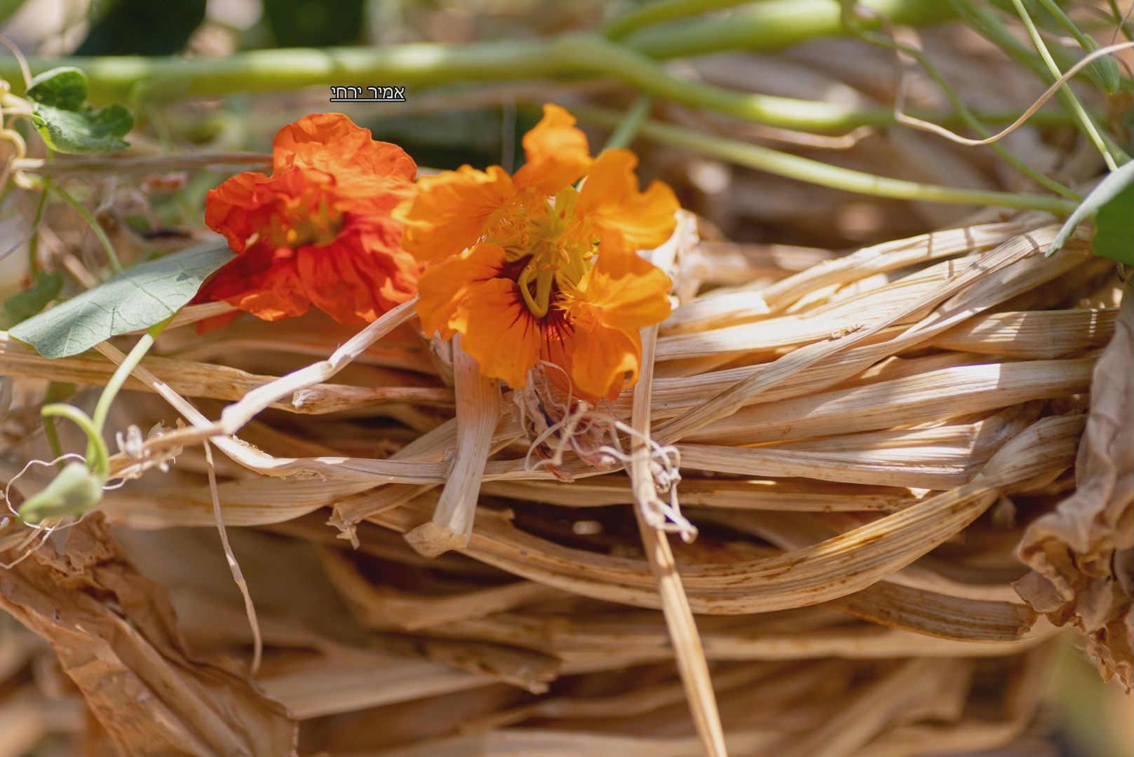 חפצים - עיצוב הבית ימי קורונה שאינם מפסיקים להפתיע</br>הכובע מכובע הנזיר