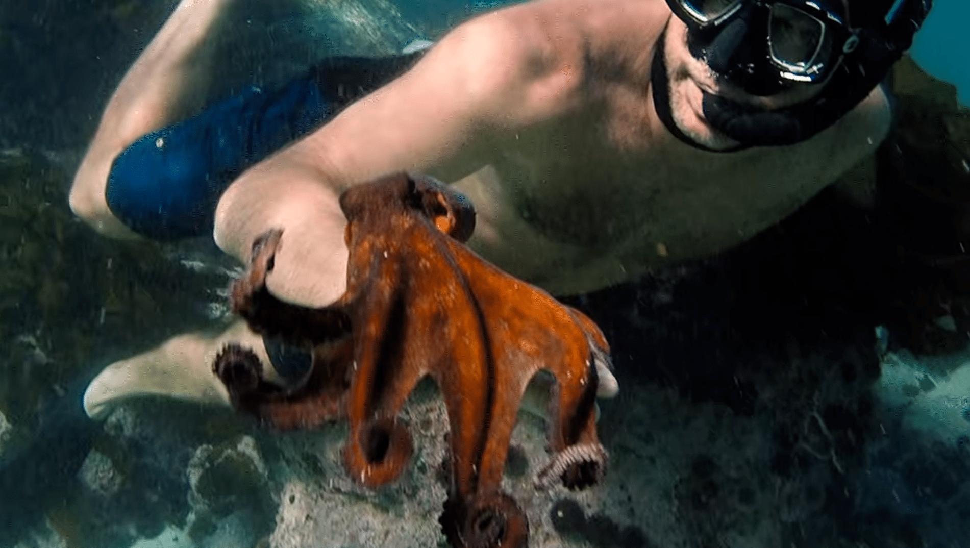 מגזין ''מקו ועד תרבות'' - ''חפצים'' My octopus teacher</br>סרט לוכד