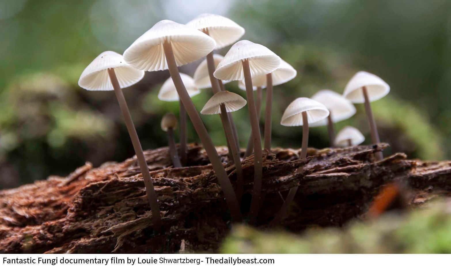 חפצים לא תאמינו<br>סיפורן של הפטריות