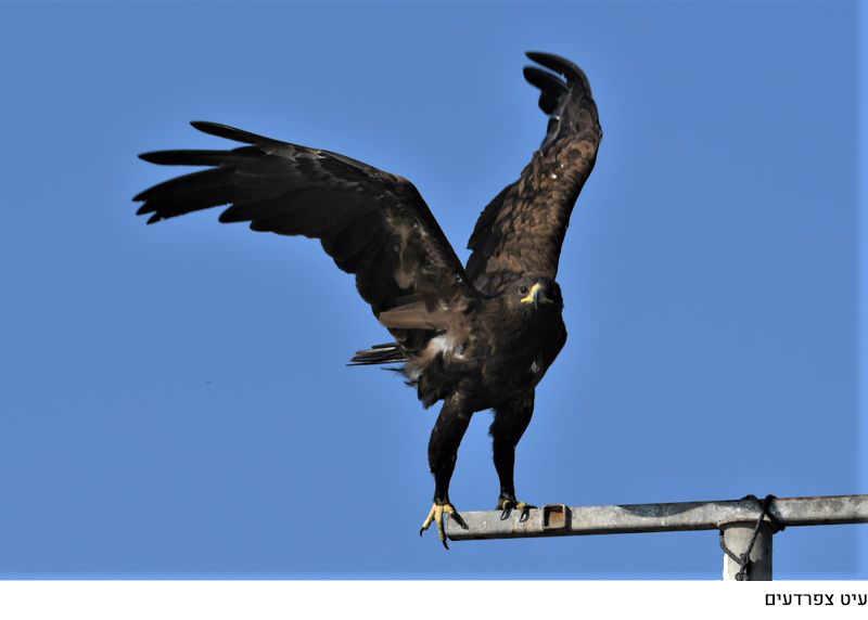 חפצים נחל אבוקה. ומה בהמשך?<br><br> הצעה והמלצה שקשה מאד לסרב לה -<br><br>בריכות לתצפית בציפורים הנודדות בעמק בין הסתיו לאביב.